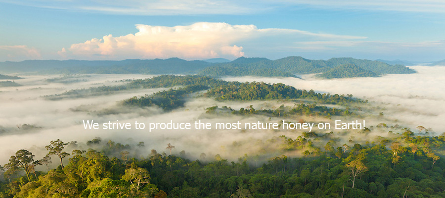 borneo's natural honey